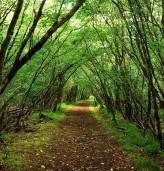 Със състезание между ученици от Добрич ще се даде символичен старт на Седмицата на гората 2017 година