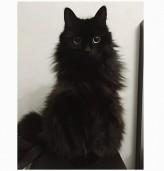 Когато черна котка ти мине път...