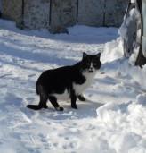 Жълт код в област Добрич за вторник, снегът се завръща