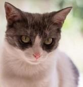 Котка в дома ни прави по-здрави