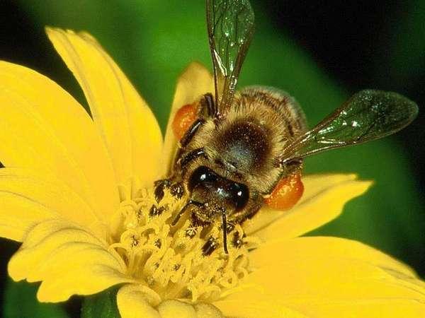 """До 2 септември фонд """"Земеделие"""" приема заявления за плащане по пчеларската програма"""