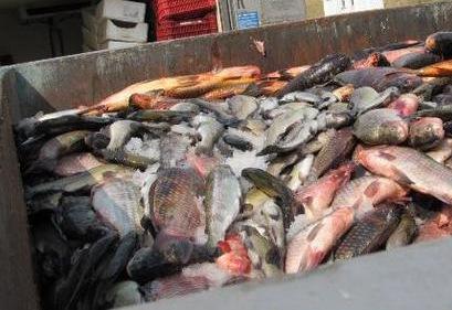 Изграждат рибен пазар в Шабла