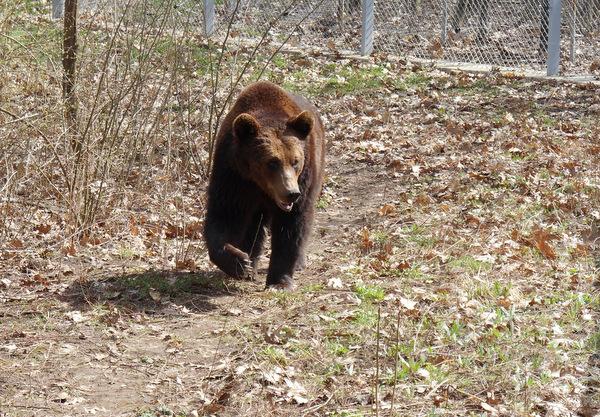 Добрич - най-добрият град за живеене на мечки (+снимки)