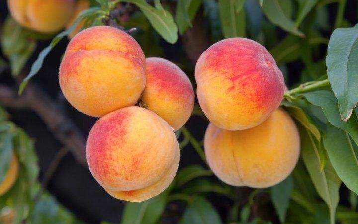 Обмислят обратно начисляване на ДДС и за плодовете и зеленчуците
