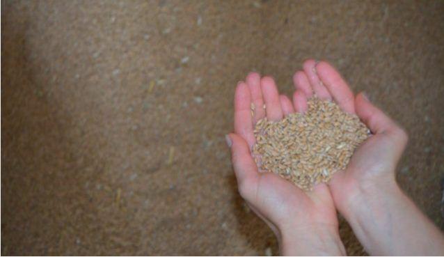 Последни дни прием за кредит за тор и семена