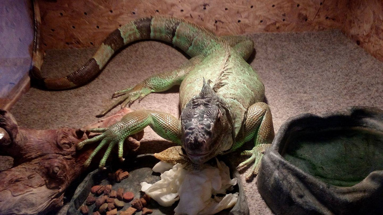 Мамби, кобри и крокодил на гости в Добрич