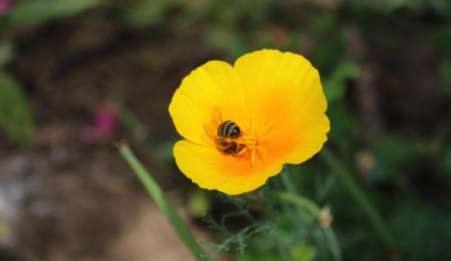 Повече от 1700 пчелари участват в пчеларската програма за 2018 г.