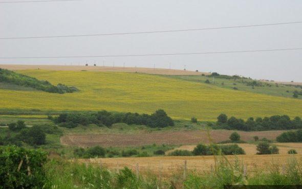 Фермерите да огледат полетата си за активни колонии на полевка