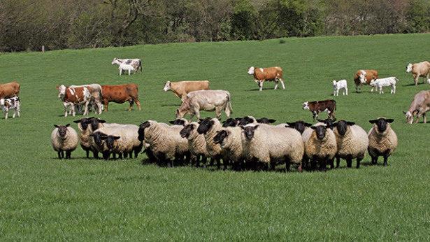 20 млн. лева отпусна ДФЗ за имунопрофилактика на животните