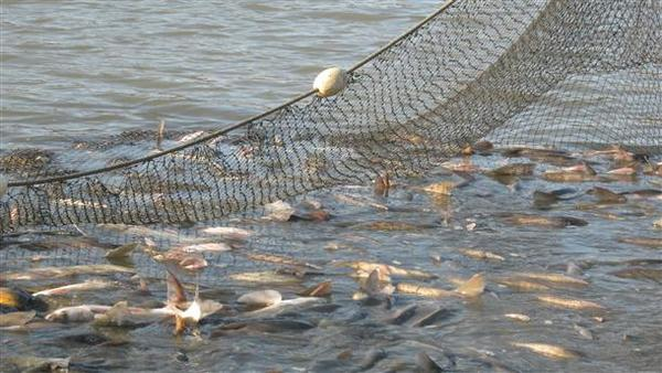 Установиха бракониерски улов в Дуранкулашкото езеро