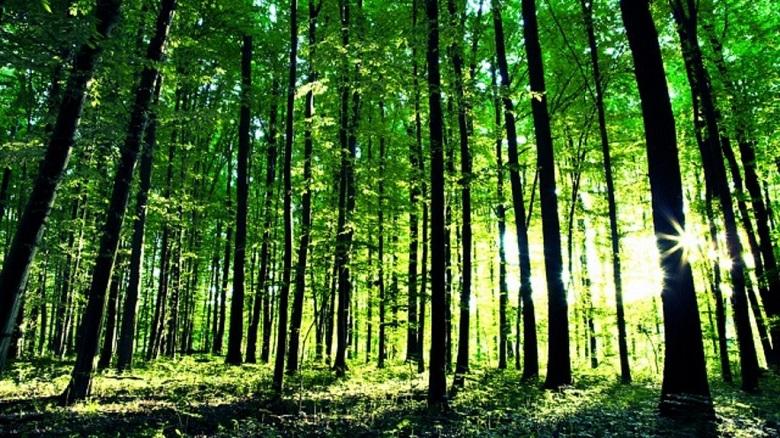 Шабленци сътворяват гора в близост до Фара