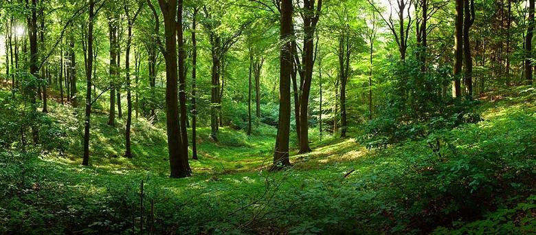 Горското стопанство в Добрич подпомага растежа на 60 дка млади гори