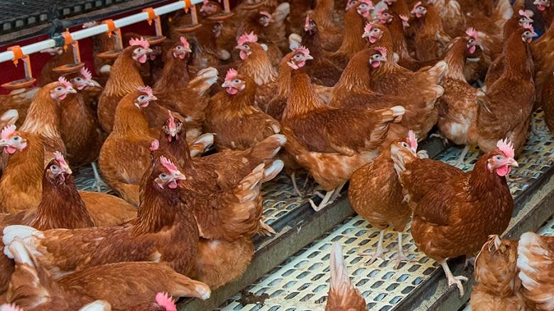 Вдигнаха забраната за продажба на птици по пазарите