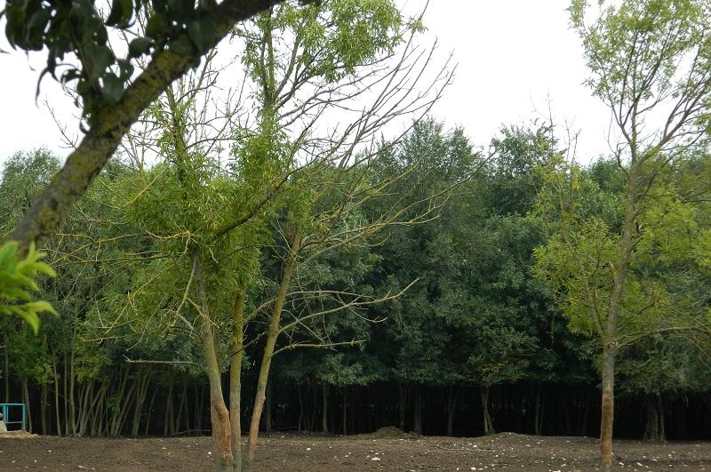 """В ДЛС """"Тервел"""" подпомагат растежа на близо 200 дка горски култури"""