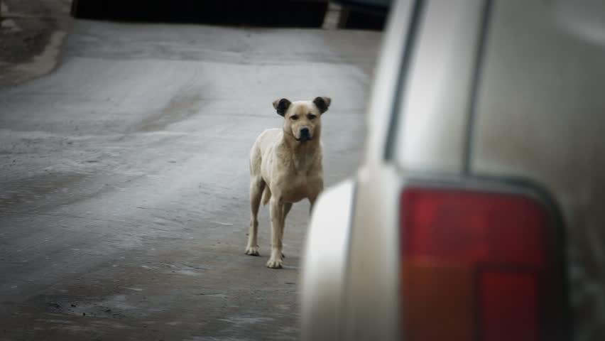 Куче предизвика катастрофа край с. Царичино, пострадаха две жени от Каварна