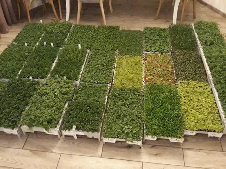 """Разсад от Холандия на 20 вида цветя пристигна в """"Чудната градина"""""""