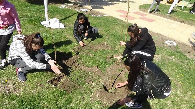 Засаждат дръвчета в учебните и социални заведения в община Крушари