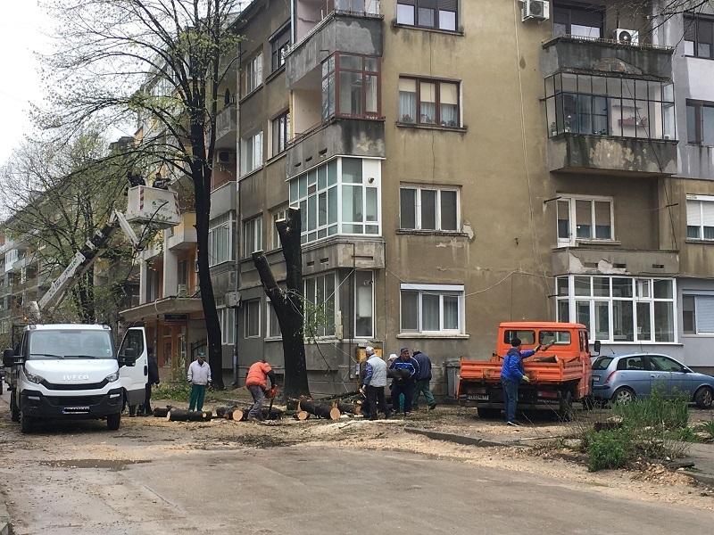 Добричлии изразиха недоволството си от премахването на дървета в града