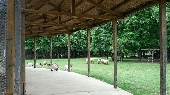 Деца ще помагат на животните в Зоопарка в Добрич през лятната ваканция