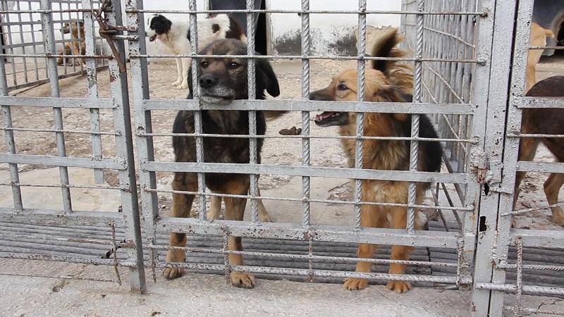 В Добрич провеждат кампания за осиновяване на кучета и събиране на средства за приюта