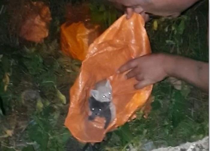 Семейство спаси завързани котки в чували в Добрич, благодарение на кучето им