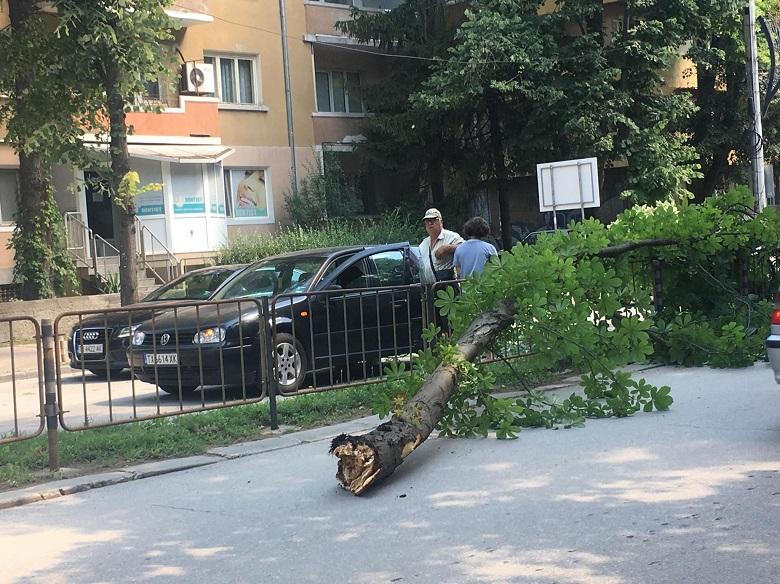 Огромен клон падна върху автомобил с дете
