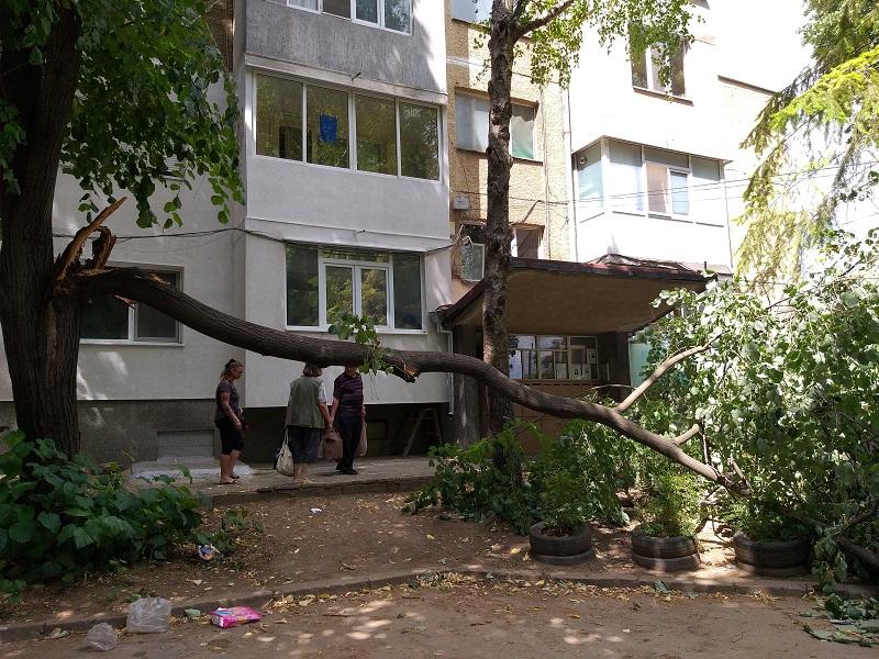 Огромен клон падна и препречи вход на блок в квартал в Добрич