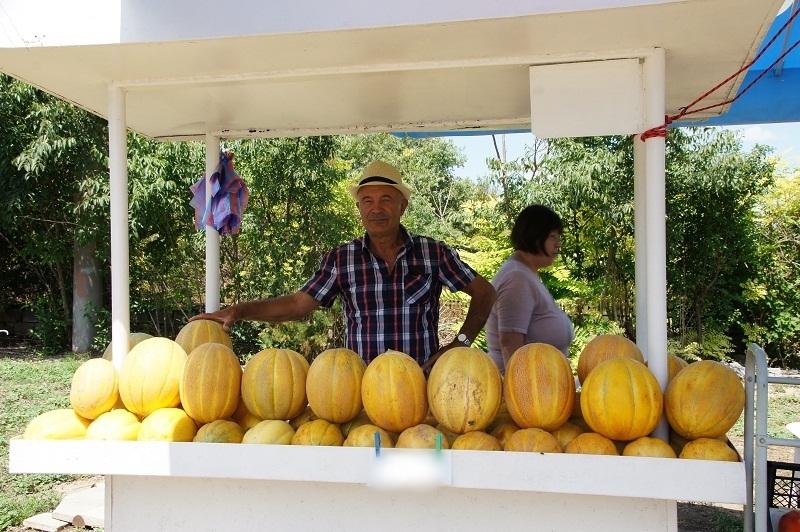 Никола Вангелов от Българево: Очертава се една добра година за производителите на пъпеши