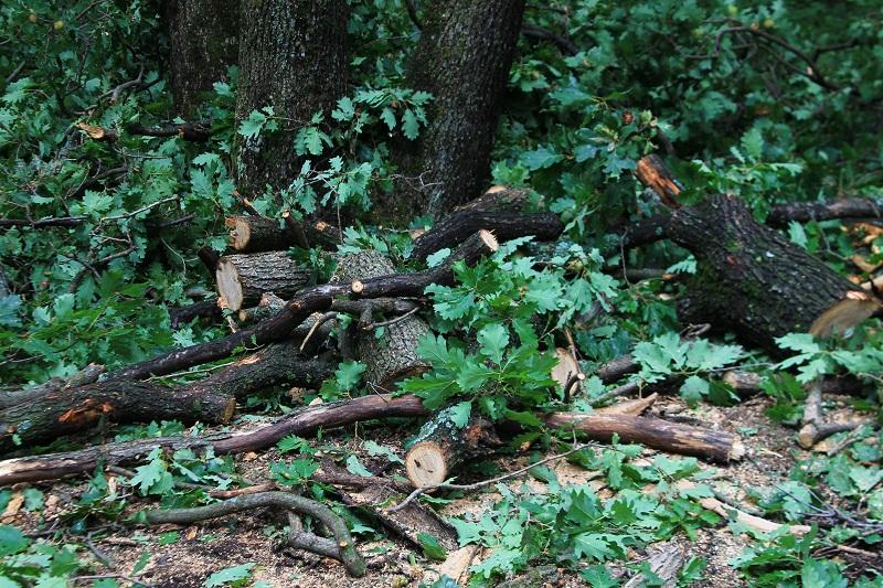 Всекидневните обходи и засилените проверки заради АЧС водят до намаляване на нарушенията в горите
