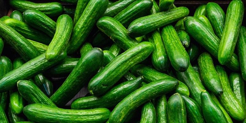 Защо краставиците дават лоша реколта: 6 възможни причини
