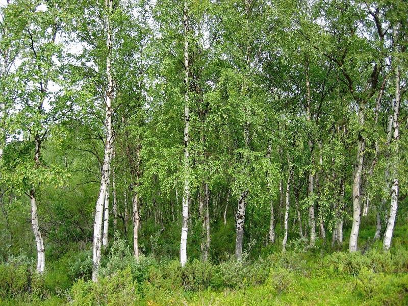 Полезащитен горски пояс в района на село Стожер ще бъде почистен и залесен
