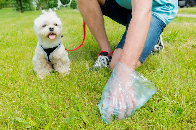 Няма глобени стопани на кучета при проверките в градския парк на Добрич