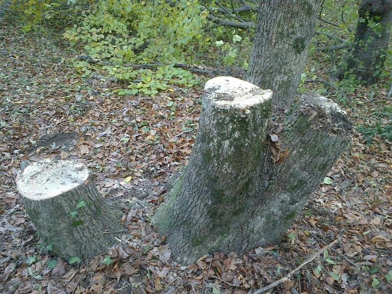 12 кубика дърва за огрев са задържали служители на ДЛС-Тервел през изминалата седмица