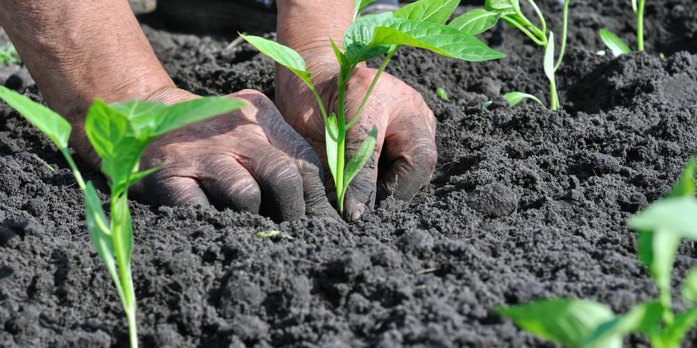 """Удължава се срокът за предоставяне на документи по мярка 11 """"Биологично земеделие"""""""