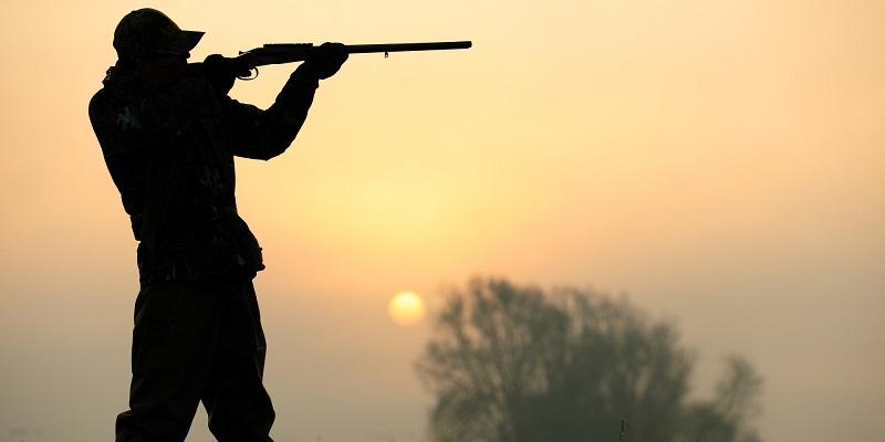 Откриха убит благороден елен в нива край с. Зърнево