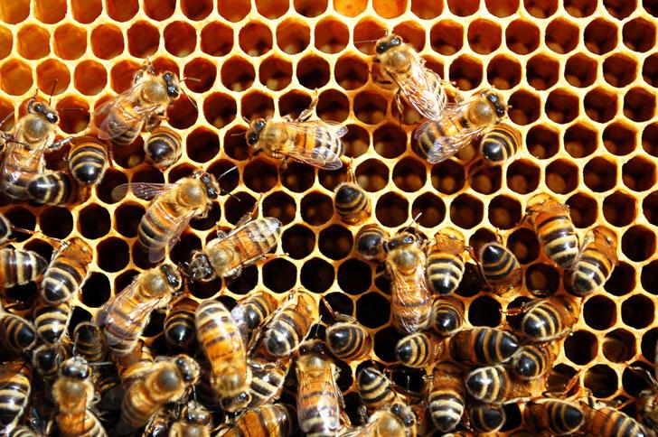 До 18-и октомври пчеларите кандидатстват по de minimis