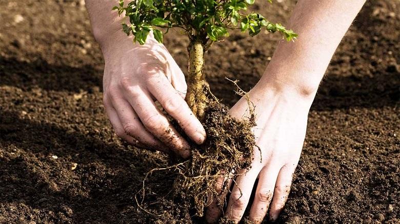Общо 78 дървета ще бъдат засадени в четири района на Добрич