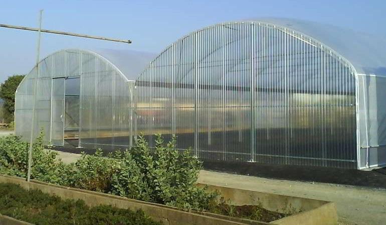 До 1 ноември оранжерийните производители кандидатстват за помощ за борба с вредителите