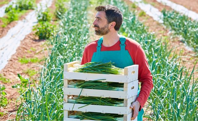 Млади фермери ще могат да кандидатстват за свободни земеделски земи от ДПФ