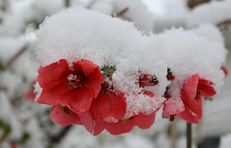 Днес имен ден празнуват Снежана, Снежа и Белослава