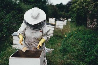 Отварят новата пчеларска програма, средствата за 2020 г. вече са ясни