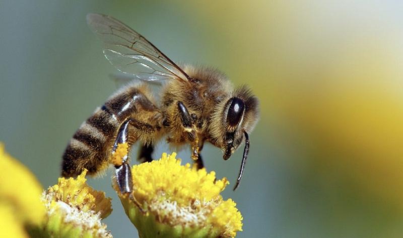 От 5 март започва прием по мерки А, Б и Е от Пчеларската програма