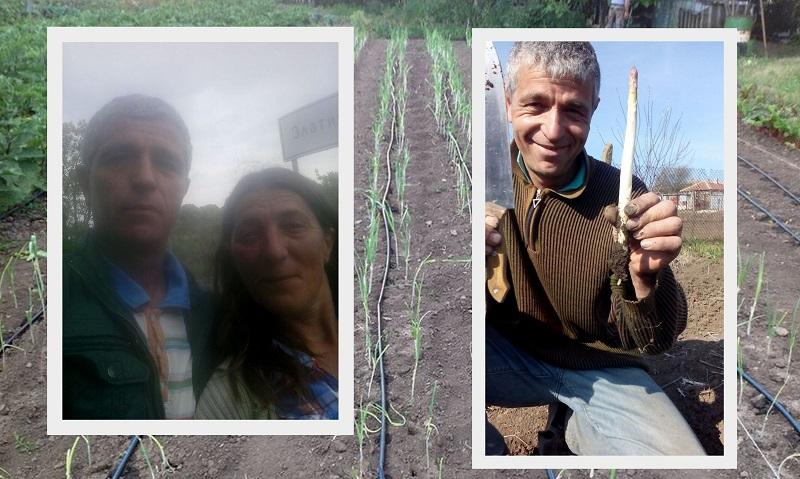 Сезонна продукция и без оранжерии отглежда семейство в градина край Добрич