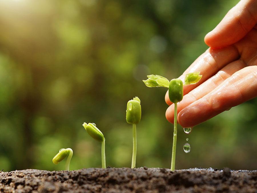 Как да отгледаме здрав и устойчив разсад?