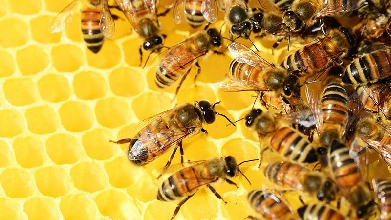 """Фонд """"Земеделие"""" ще кредитира одобрени проекти по Пчеларската програма при 3% лихва"""