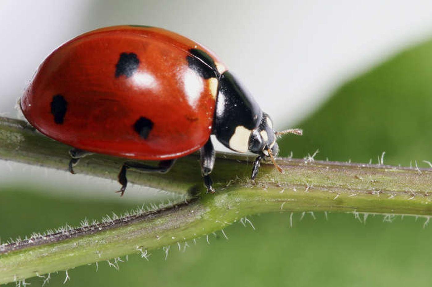 Отбелязваме Международния ден на биологичното разнообразие