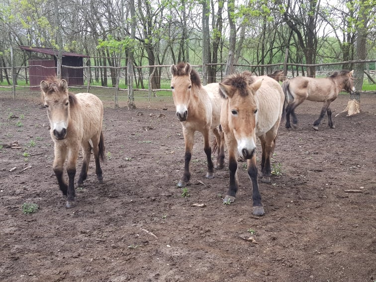Безплатен вход в Центъра за защита на природата и животните в Добрич за 1 юни