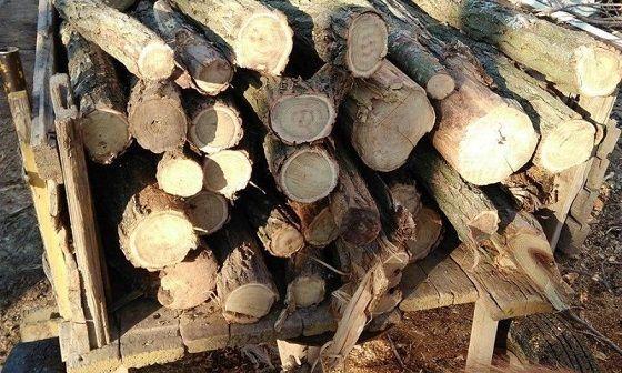Задържаха 23 кубика незаконна дървесина в ДЛС Тервел