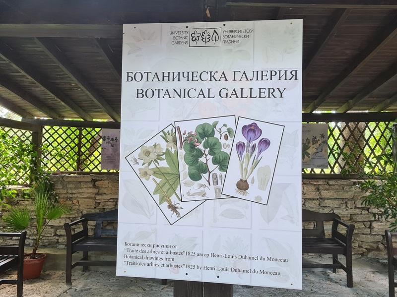 Ботаническата градина в Балчик представя галерия с научни илюстрации