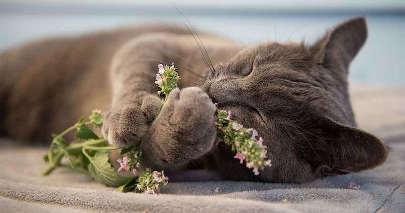 Отбелязваме Международния ден на котките